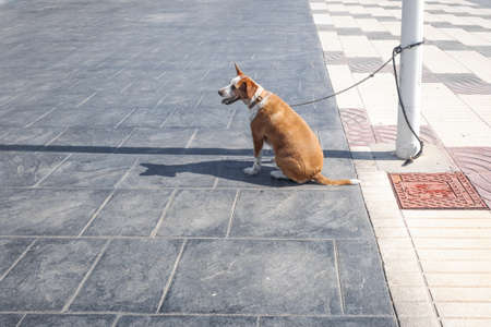 A small dog tied to a lamppost waits patiently and happily on the street of a city for its owners. 免版税图像