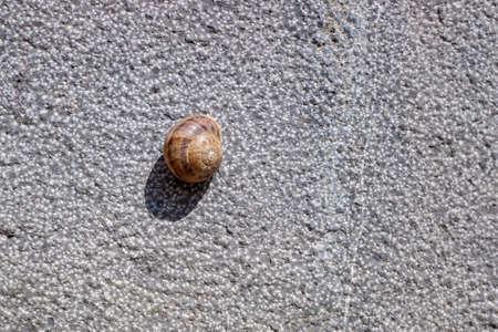 A lone snail hidden inside its shell, stuck to a wall in the sun in summer. 免版税图像