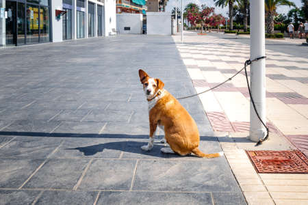 Dog tied to a lamppost while waiting patiently on the street. 免版税图像