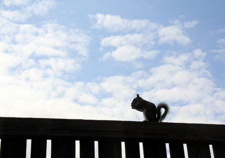 Squirrel on the Sky