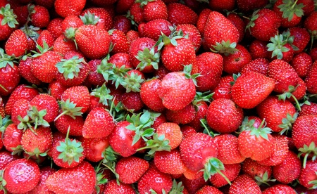 Sea of Strawberry Stock Photo