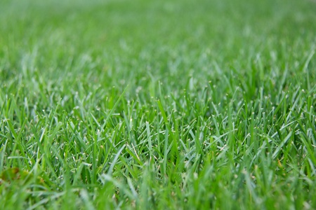 Beautiful and well-groomed green grass on the street of big city