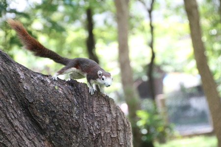 creep: a squirrel climb on a tree Stock Photo