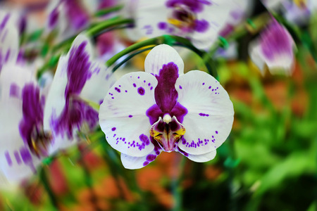 spin: Purple orchid flowers with spin Stock Photo