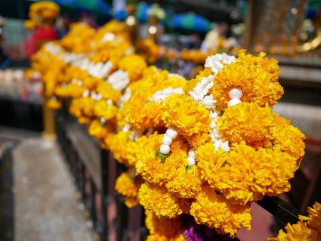 Group of Tagetes erecta aka Marigold hang on the fence of Erawan Shrine. Stock Photo