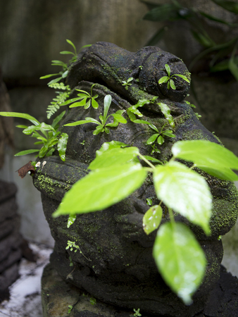 asian art: Plants growing from a frog statue