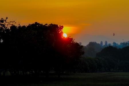 impassive: sunset