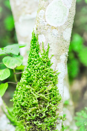 Green moss climbing up the  branch of a  tree photo