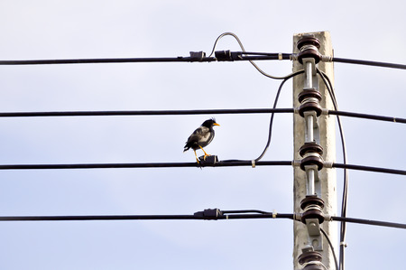 the electricity post and a black bird photo