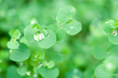 dew drop and green leaf background