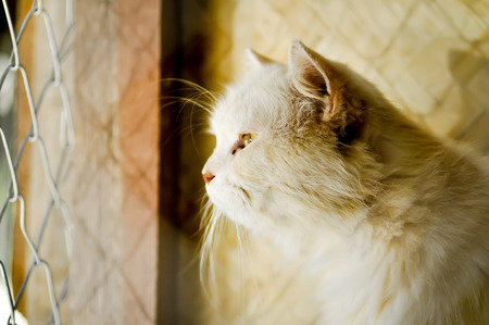 incarcerate: a brown cat in the cage