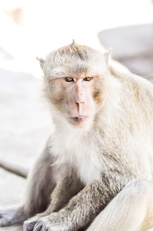 anthropomorphism: a  young monkey