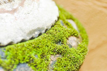 clinging: moss on the vase