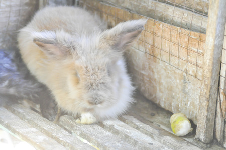 rabbit in cage: a grey rabbit in the cage