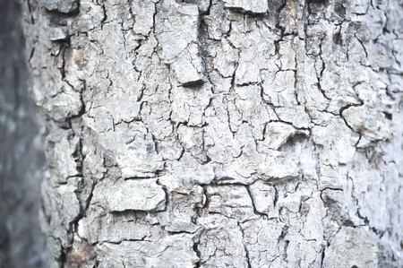 rind: Rind or tree bark in the forest Stock Photo