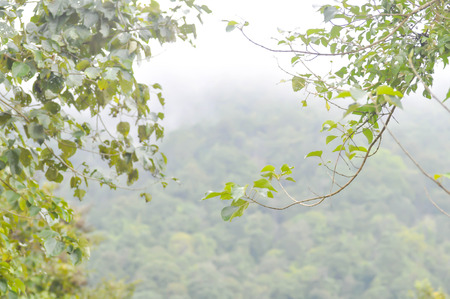 aire puro: la niebla y el aire fresco de la montaña, la naturaleza de fondo Foto de archivo