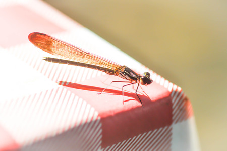 characterize: a dragonfly on the table