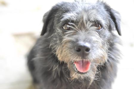 stray dog or half-breed dog on the floor