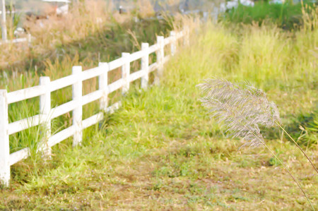 white fence and field background Stock Photo