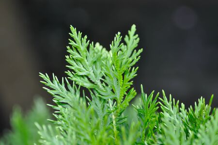 fern , fern plant in thwe garden Stock Photo