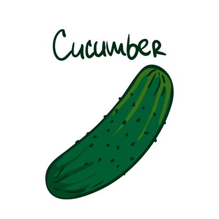 Illustration vectorielle. Concombre vert. Nourriture végétarienne saine. Ingrédient pour la salade. Décoration pour patchs, enseignes, vitrines, menus. Isolé sur fond blanc