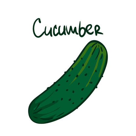 Vector illustration. Green cucumber. Healthy vegetarian food. Ingredient for salad. Decoration for patches, signboards, showcases, menus. Isolated on white background
