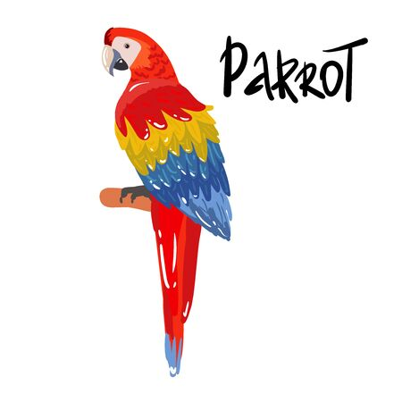 Ara parrot. hand drawing Isolated vector tropical design element. Tropical birds on the white background.