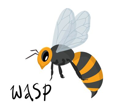 vector illustration with wasp, bee on a white background isolated,