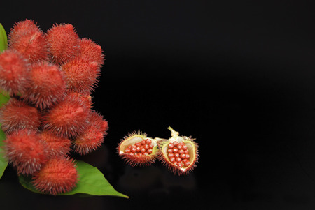 Urucum and achiote in black background