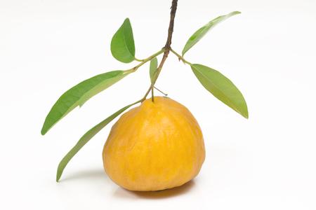 One Brazilian fruit called Uvaia in white background - (Eugenia uvalha Cambess)