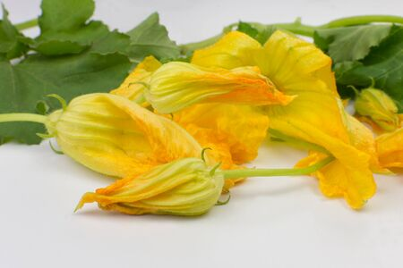 Edible zuchinni bud and flowers called cambuquira, used to make many Brazilian recipes