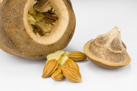 Brazilian Lecythis pisonis seeds and fruits isolated in white background Imagens