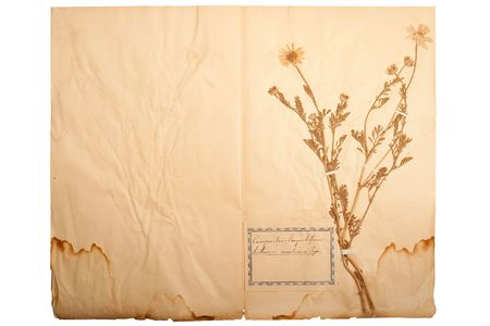 gone: Pressed flower on old, gone yellow paper (Herbary, sheet 1) Stock Photo