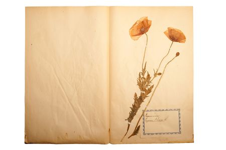 Pressed flower on old, gone yellow paper (Herbary, sheet 4) photo