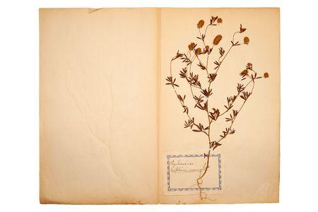 Pressed flower on old, gone yellow paper (Herbary, sheet 7) 版權商用圖片 - 6130902