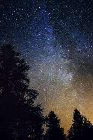 Silhouet van gigantische groenblijvende bomen in de voorkant van de Melkweg Stockfoto