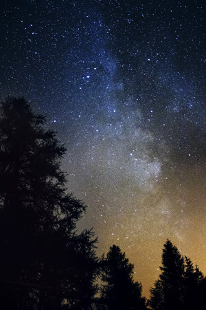 family constellation: Silhouette of giant evergreen trees in front of the Milky Way