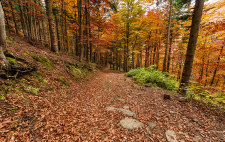 autumn path: autumn colors, path  in the forest in the fall season. scenery magic landscape
