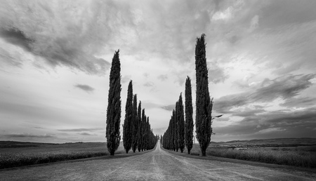 Cypress rij in Val D'orcia, Toscane. Italië