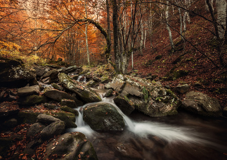little waterfall in forest. Flow and stream water Stockfoto