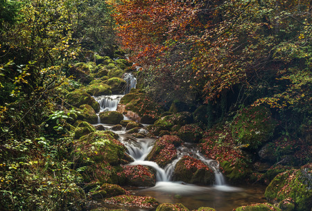 Colorful autumn in forest. Closeup on water stream and rocks. Foliage and ater flow