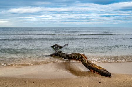 amazing sand beach landscape, sea horizon with trunk on the shore at sunset. Cloudy blue sky Zdjęcie Seryjne