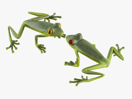 Two frogs look at each other on white background 3d rendering