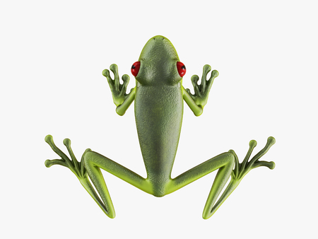 Green frog top view on white background 3d rendering