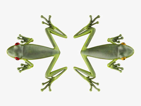 Two frogs turned away from each other on a white background 3d rendering