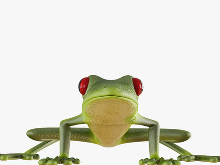 Green frog front view on white background 3d rendering