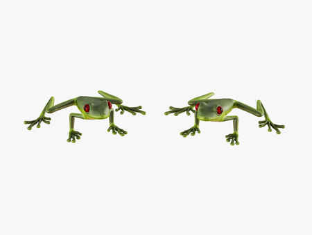 Two green frog front view on white background 3d rendering Stock Photo