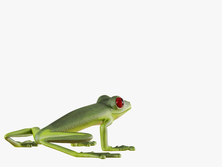 Green frog  on a white background 3d rendering Stock Photo