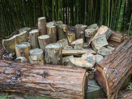 A pile of sawed stumps. Park Arboretum Stock Photo