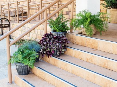 Beautiful green plants on the steps at entrance to the house Stok Fotoğraf